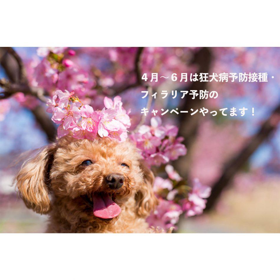春の狂犬病キャンペーン